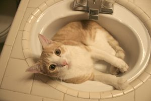 Clogged Drain Cat